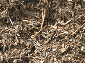 Arborist Tree Mulch
